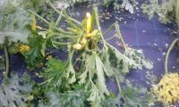 Zelenjadarstvo in okrasne rastline